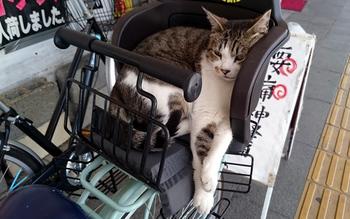 705 高田の猫.jpg